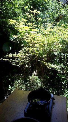 ワイルドな庭