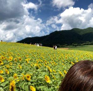 蒜山高原のひまわり